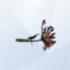 Flor de la Muerte LS4.png
