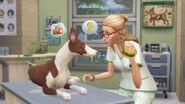 The Sims 4 - Gatos e Cães (14)