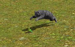 Gato caçando.png