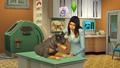 The Sims 4 - Gatos e Cães (3)