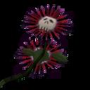 Flor da Morte Death Flower.png