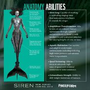 Freeform Official Mermaid Anatomy and Abilities Poster