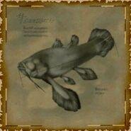 Ancient Fish Sketch