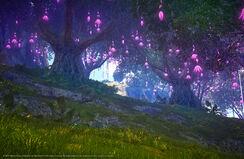 Purple Flower Trees
