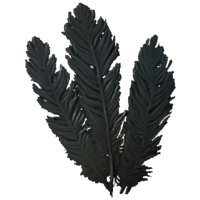 HagravenFeathers.png