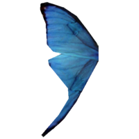 BlueButterflyWing.png