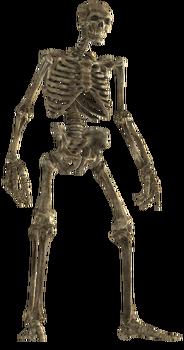 Skeletal remains.png