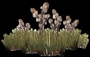 Spiky grass plant