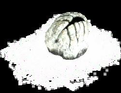 a spider eggsac
