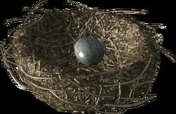 Chicken's nest with a Chicken's egg