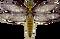 Illustration Dragonfly.png