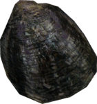 PearlOyster thin.png
