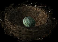 Bird's nest with a Rock Warbler egg