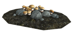 Imp stools as they appear in caves