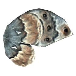 Ancestor Moth Wing