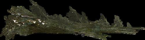 Mora Tapinella as they appear on fallen logs