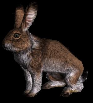 Rabbit.png
