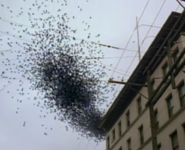 Spiderwasp swarm