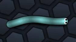SnakeSkin 3.png