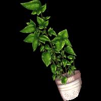 U19 Roślina doniczkowa