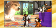 Félicitations Duo Duck Hunt 3DS All-Star