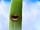 Green Bean Giant