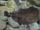 Torpediniformes
