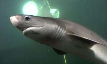 Sharksurprise.jpg