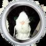 Ian's Cat