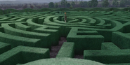 HedgeMaze