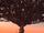 Nevermore Tree