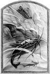 Fishy-flyer