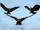 V.F.D. Eagles