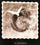 Fig3 lockofhair
