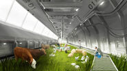 Livestock Car