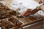 Preparing seeds for roasting at NeoLoco, 2-10-21