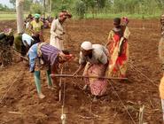 Nabahya F. I. farming scene, 4-1-21