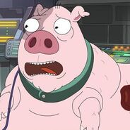 Peter-the-pig