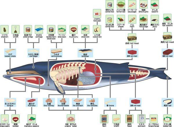 Dm whalemeat.jpg
