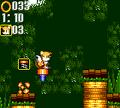 Bouncy Jungle Fox