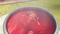 S1E30 Pepper cyclops bath