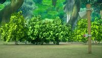 S1E30 Knuckles bush