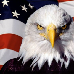 Murica the Eagle
