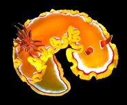 Glossodoris rubroannulata