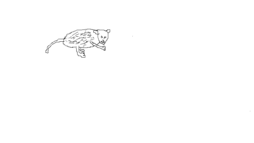 Annabelle the Opossum