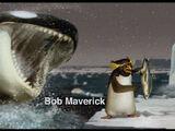 Bob Maverick