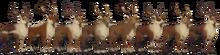 Reindeers.png