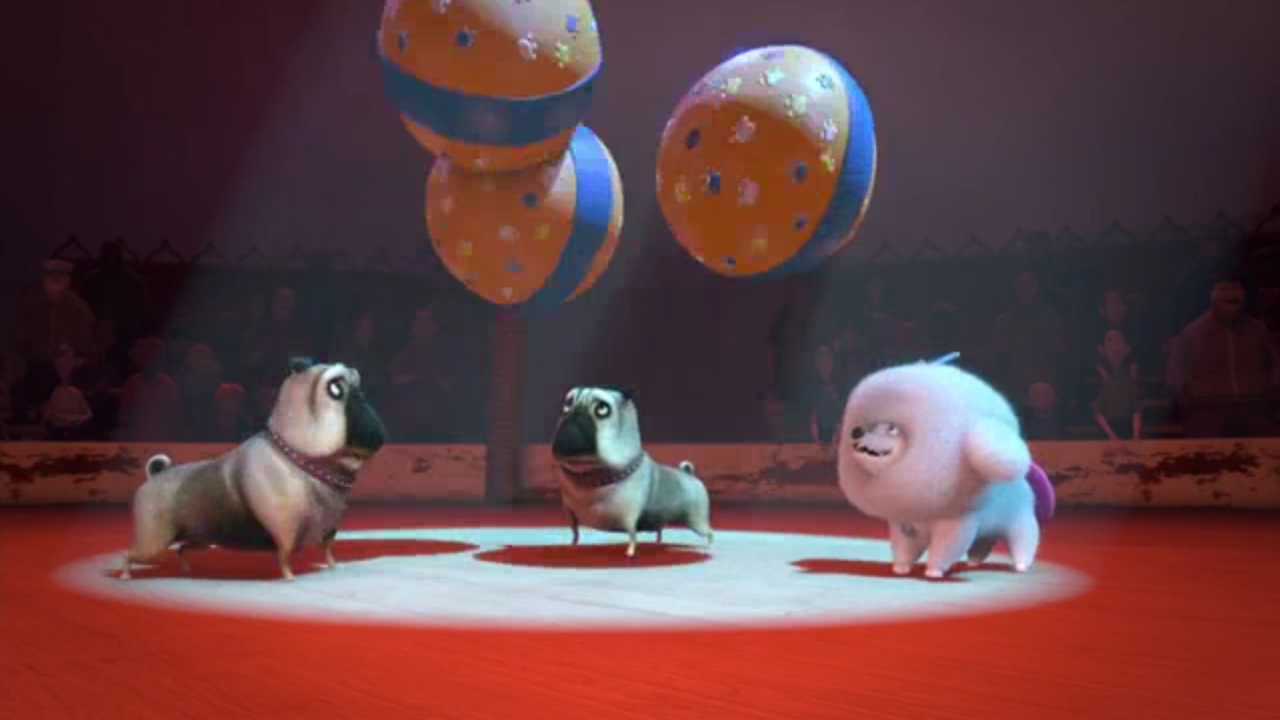 Juggling Pugs