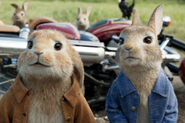 Peter-rabbit-feature