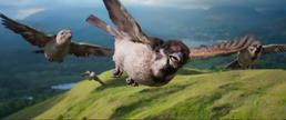 Peter Rabbit Sparrows.png